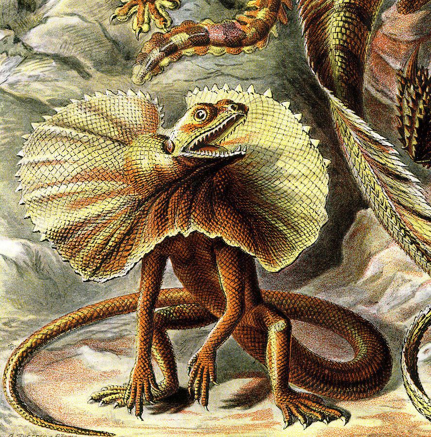 Lacertilia Digital Art - Lizard Detail IIi by Unknown