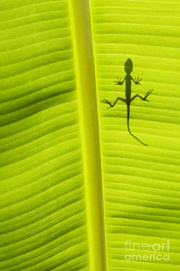 Lizard Photograph - Lizard Leaf by Tim Gainey