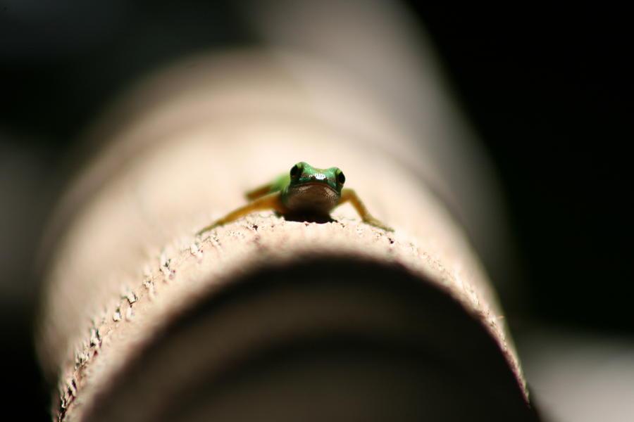 Lizard In The Sun Photograph - Lizard On A Log by Debbie Cundy