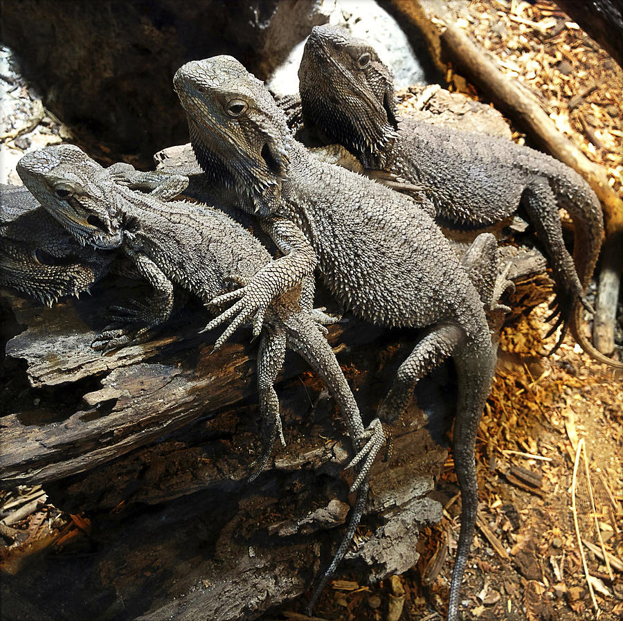 Team Photograph - Lizards by Les Cunliffe