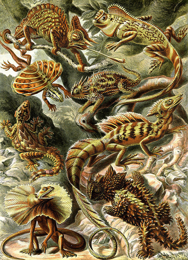 Lacertilia Digital Art - Lizards Lizards And More Lizards by Unknown