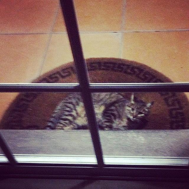 Animal Photograph - #lúnlunbella #cat #cats #catsagram by Ivette Velez