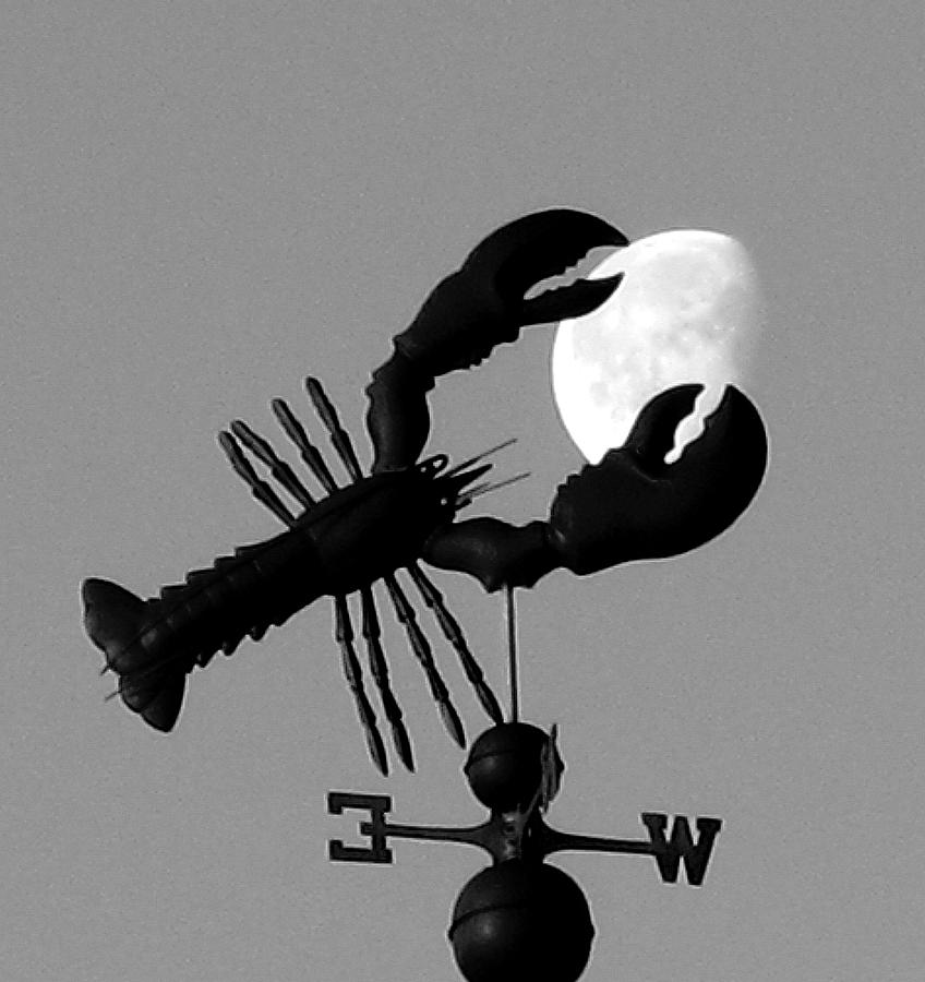 Lobster Over The Moon Photograph