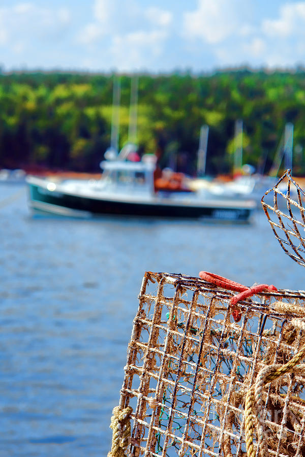 Maine Photograph - Lobster Trap In Maine by Olivier Le Queinec