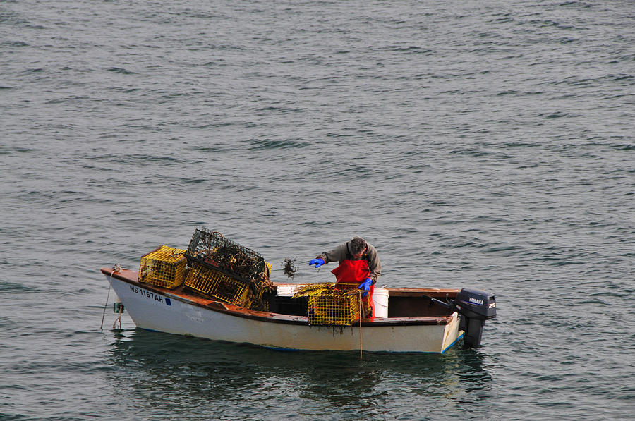 Seascape Photograph - Lobsterman Cleans Trap by Mike Martin
