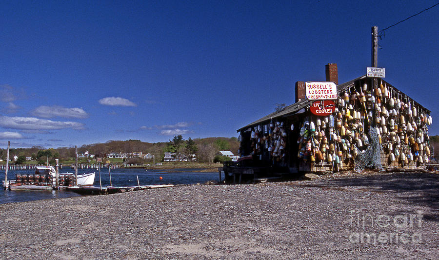 Scenic America Photograph - Lobsters by Skip Willits