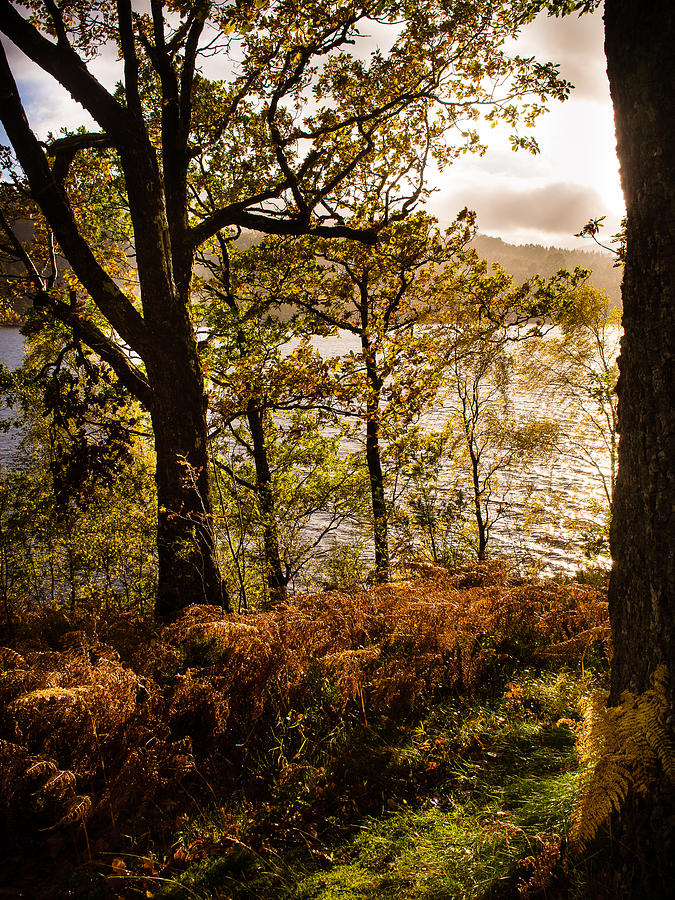 Bracken Photograph - Loch Garry by Mark Llewellyn