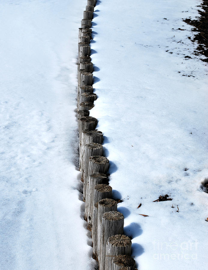 Botanic Photograph - Log Fence In The Snow by Nancy Mueller