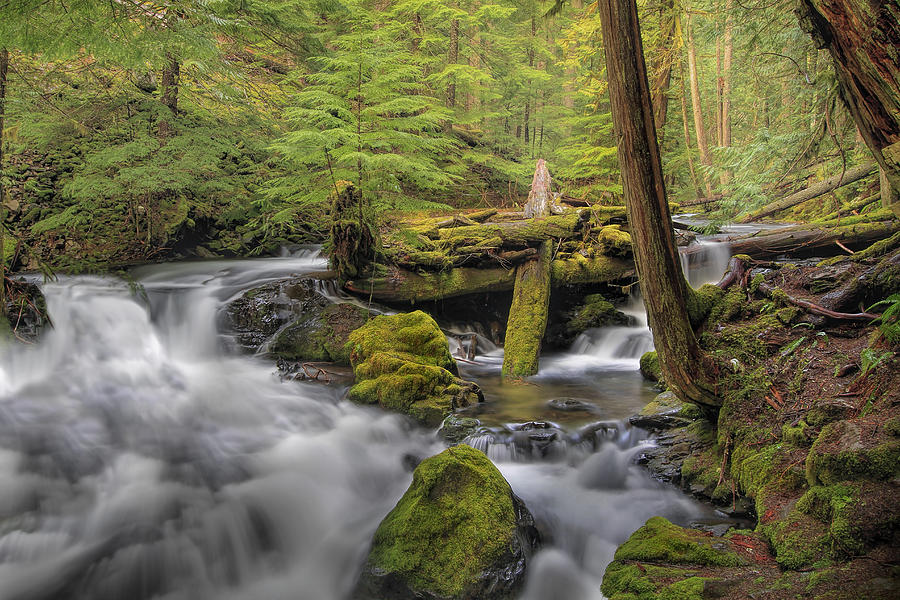 Panther Creek Photograph - Log Jam by David Gn