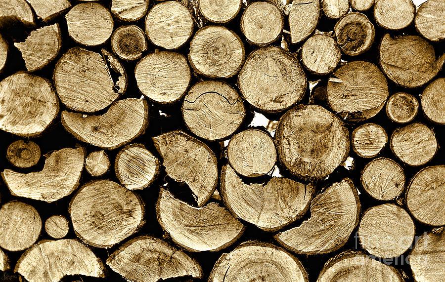 Logs Photograph - Logs by Jeff Breiman