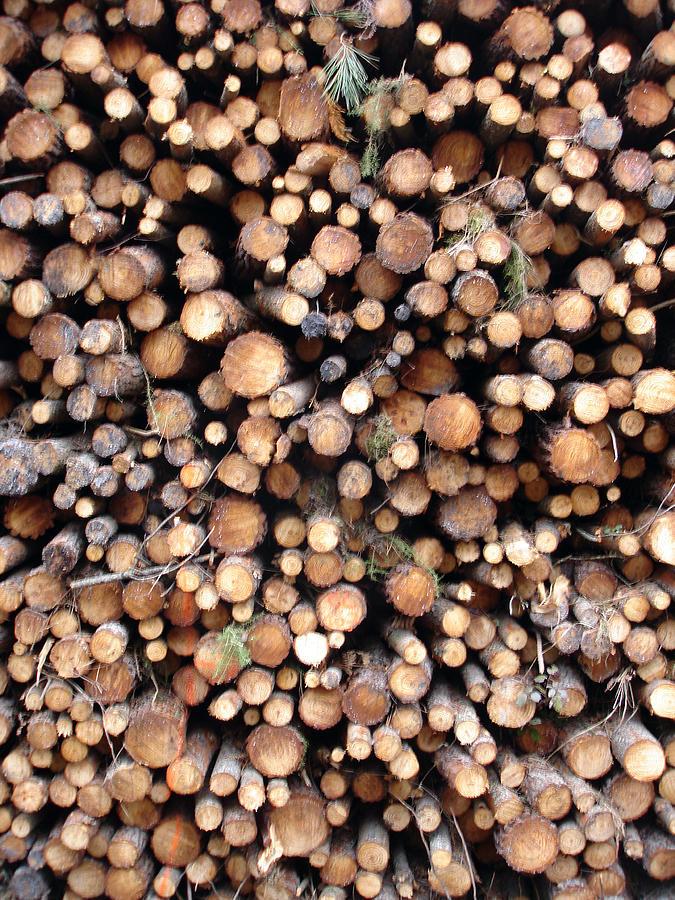 Nature Photograph - Logs by Michel Mata