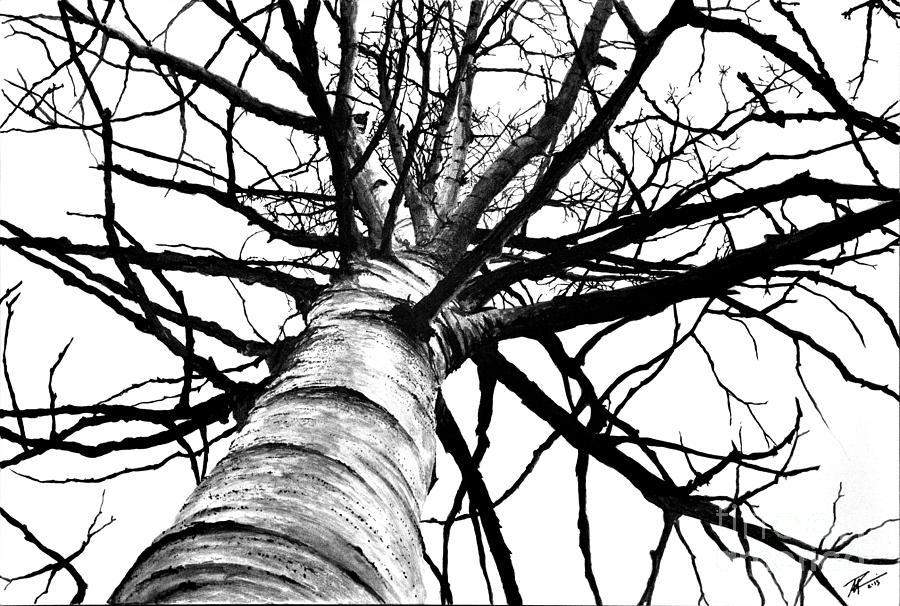 Lone Birch by Scott Robinson
