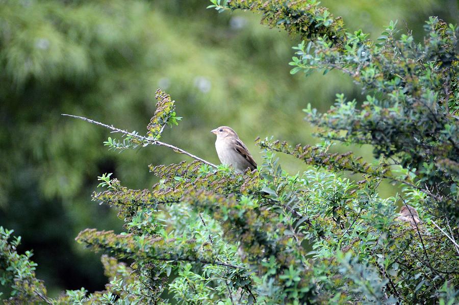 Bird Photograph - Lone Bird by David Earl Johnson