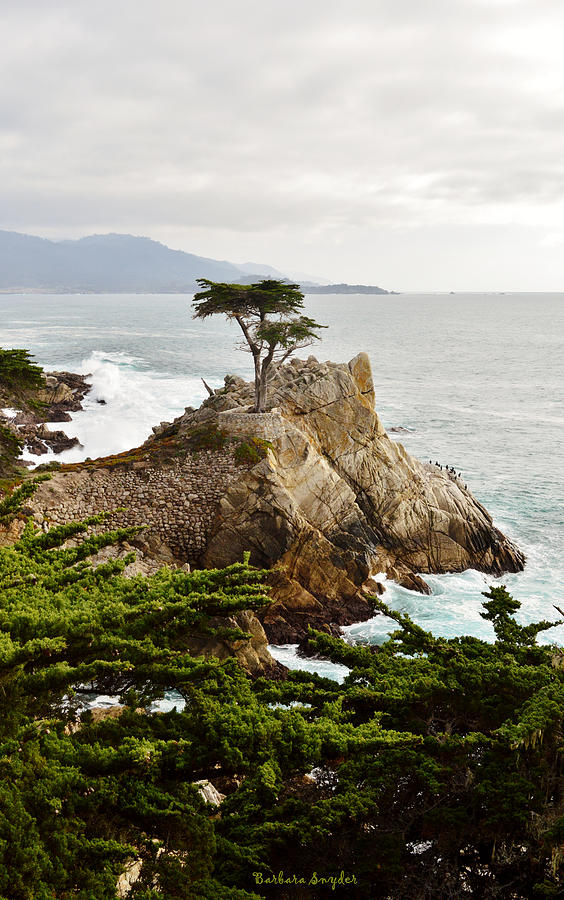Lone Cypress 17 Mile Drive Monetery Photograph