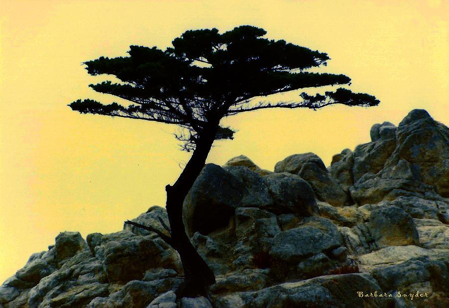 Barbara Snyder Digital Art - Lone Cypress Companion by Barbara Snyder