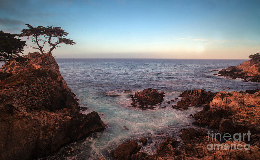 California Photograph - Lone Cyprus Pebble Beach by Mike Reid
