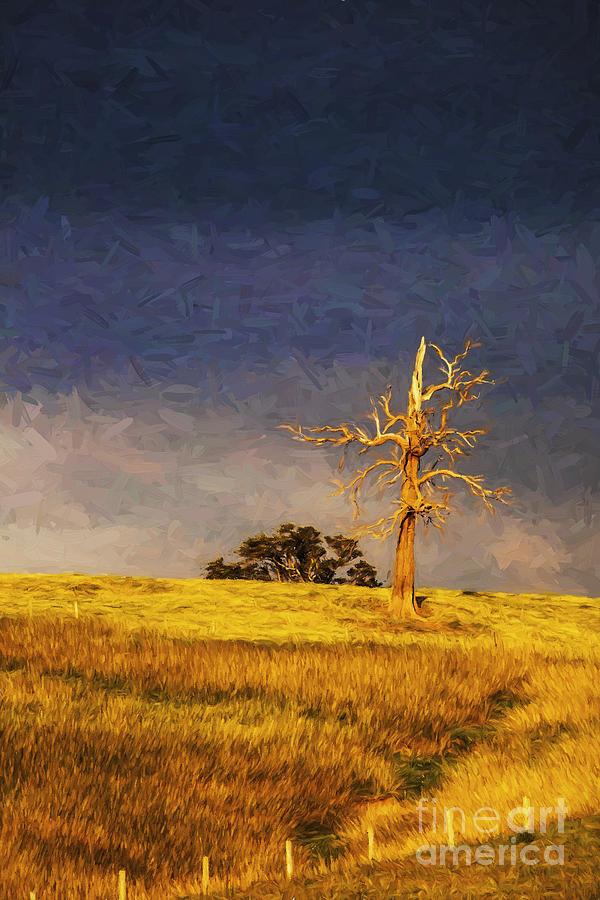 Lone Tree Photograph - Lone dead tree in paddock by Sheila Smart Fine Art Photography