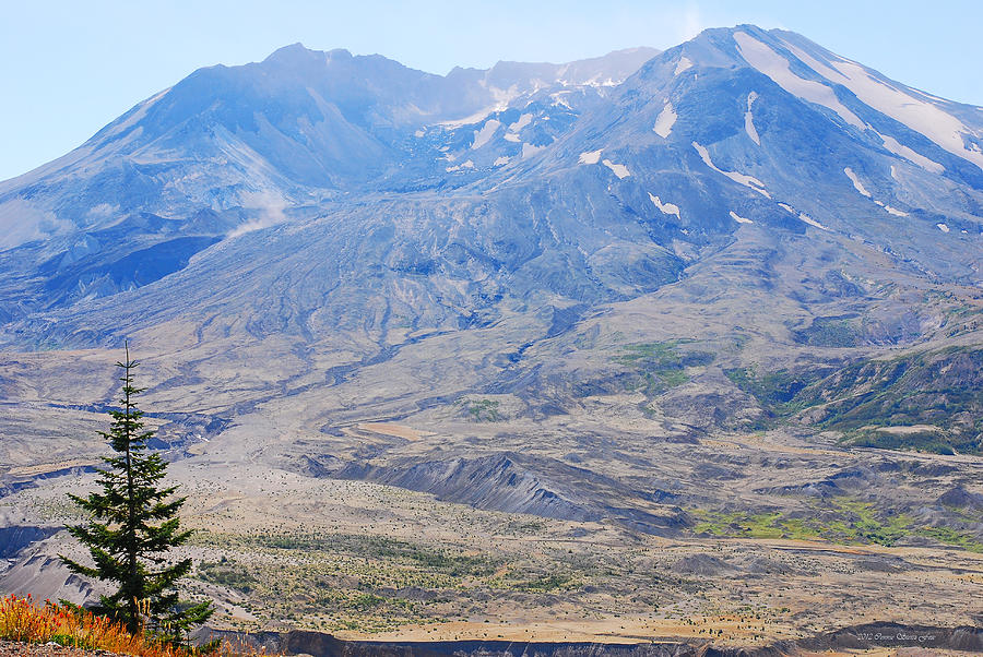 Mount St Helens Photograph - Lone Evergreen - Mount St. Helens 2012 by Connie Fox