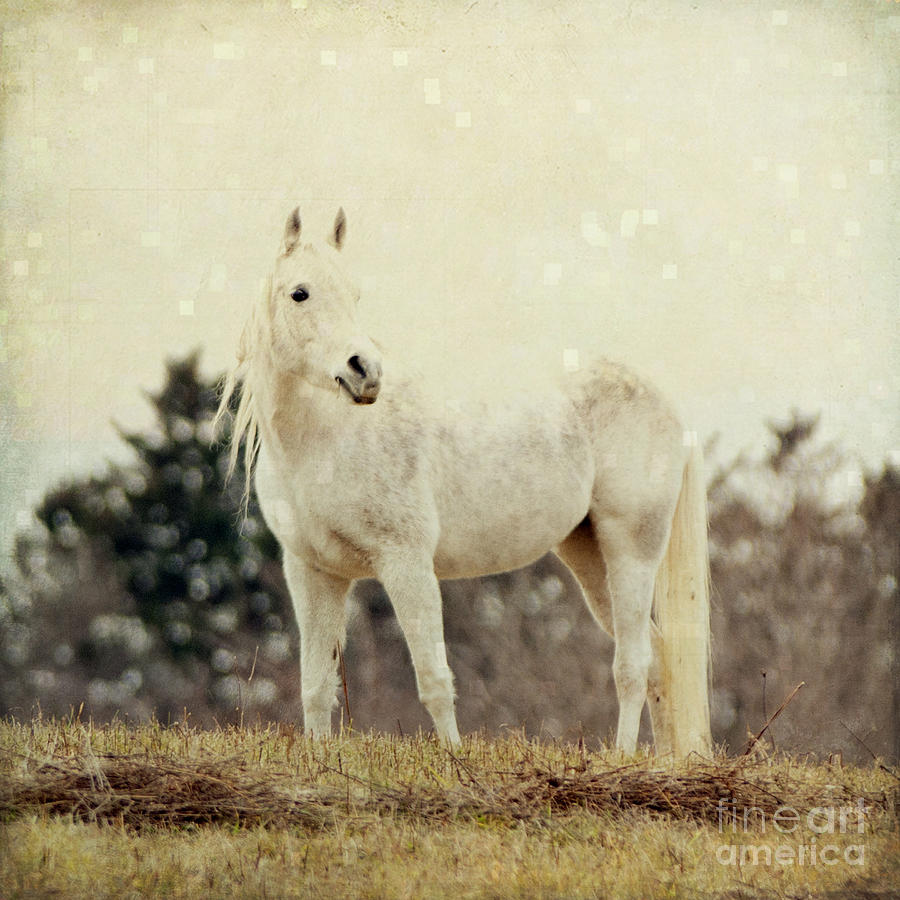 Horse Photograph - Lone Horse by Diane Miller
