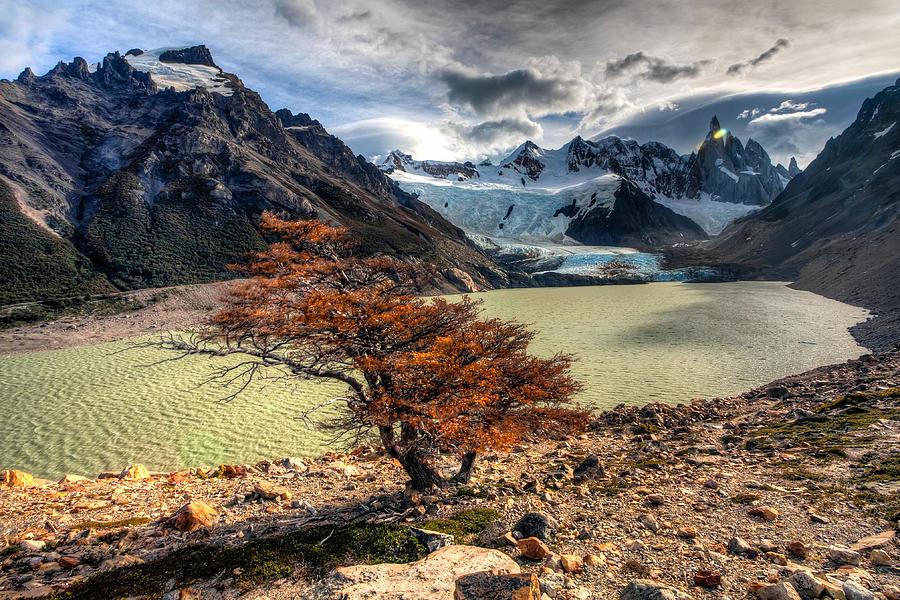 Argentina Photograph - Lone Survivor by Roman St
