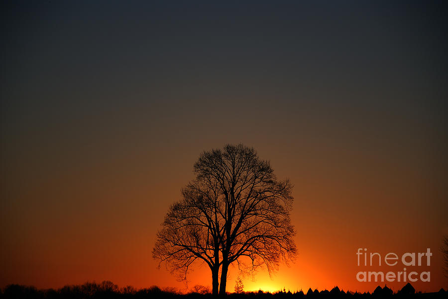 Lone Tree at Sunrise by Scott D Welch