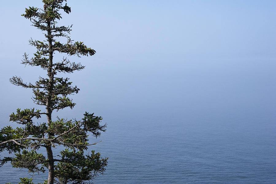 Landscape Photograph - Lone Tree By The Water In Acadia National Park by Randall Nyhof