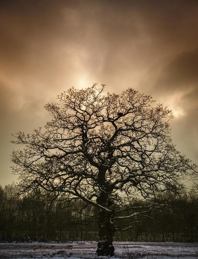Tree Photograph - Lone Tree by Amanda Elwell