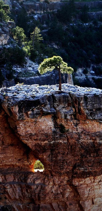 Grand Canyon Photograph - Lone Tree Heart by Alfredo Martinez