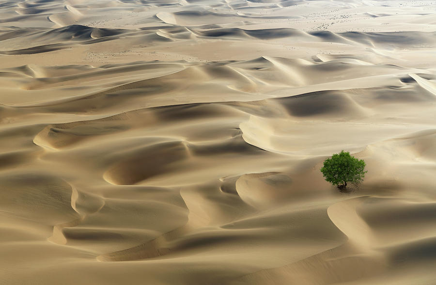Lone Tree In A Desert Photograph by Buena Vista Images