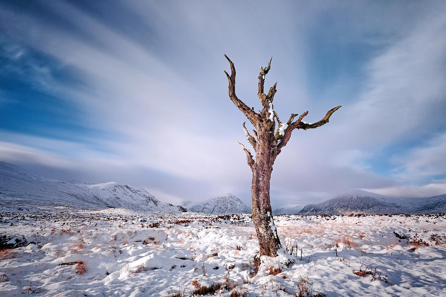 Lone Tree Photograph - Lone Tree In The Snow by Grant Glendinning