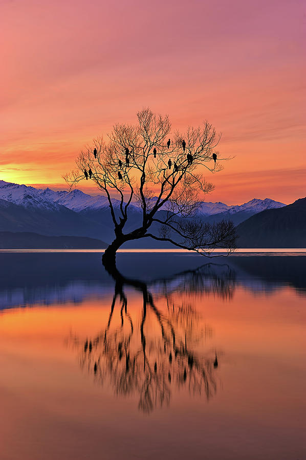 Tree Photograph - Lone Tree Is Not Lonely by Mei Xu