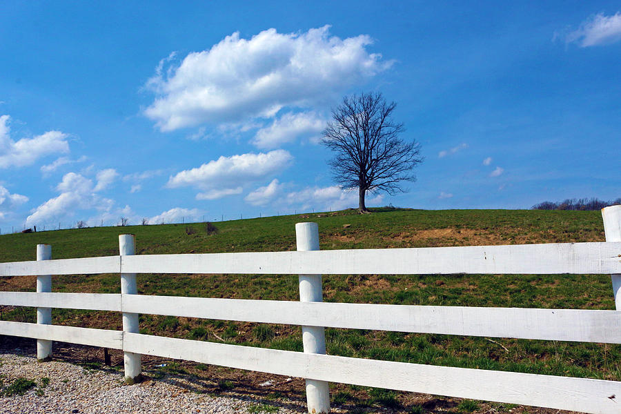 Rural Landscape Photograph - Lone Tree by Lorna Rogers Photography