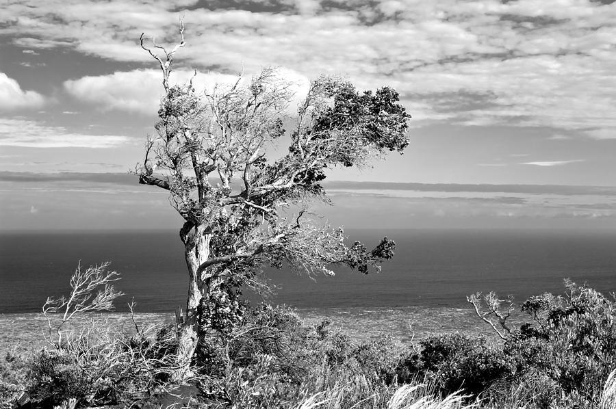 Tree Photograph - Lone Tree by Max Ratchkauskas
