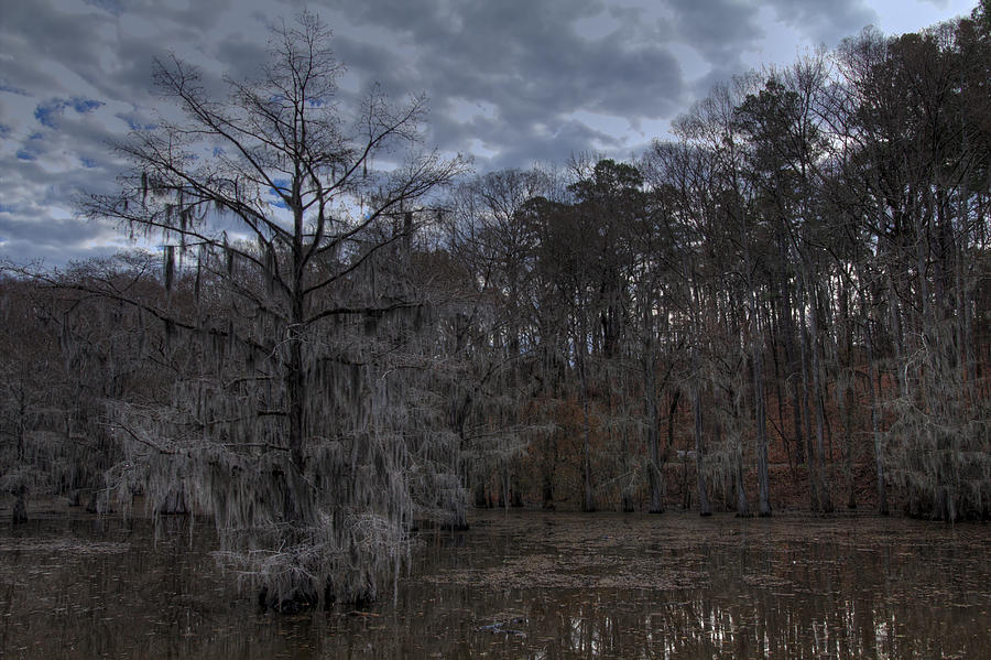 Lonely Bald Cypress Photograph