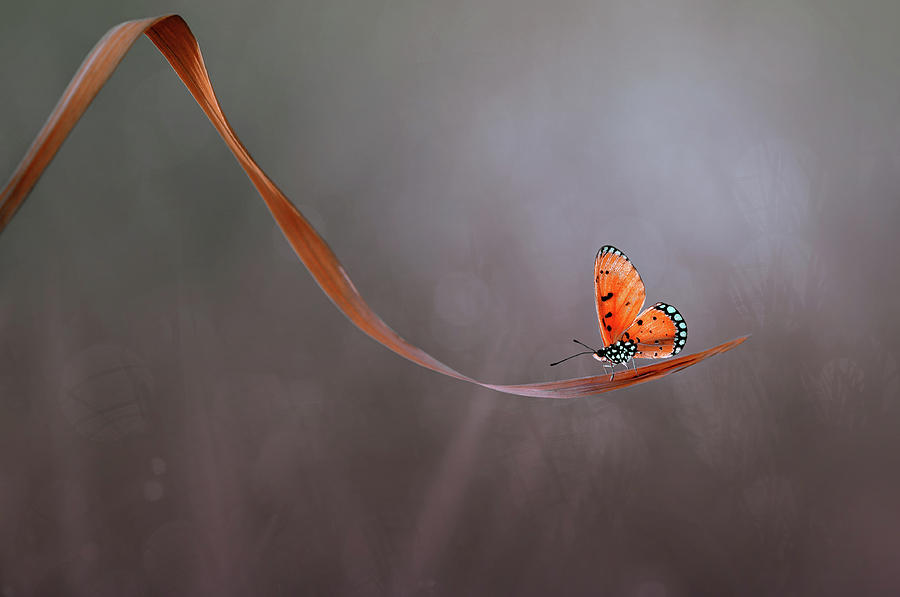 Butterfly Photograph - Lonely by Edy Pamungkas