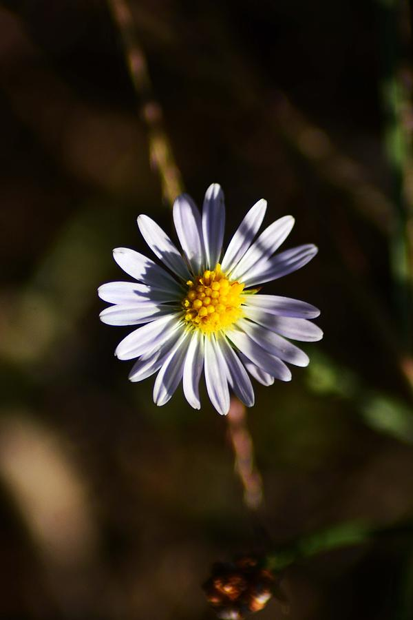 Lonely Flower Photograph by Phillip Segura