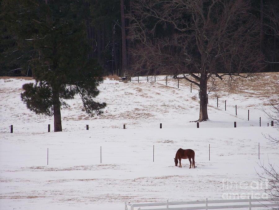 Equine Photograph - Lonely Horse by Kevin Croitz