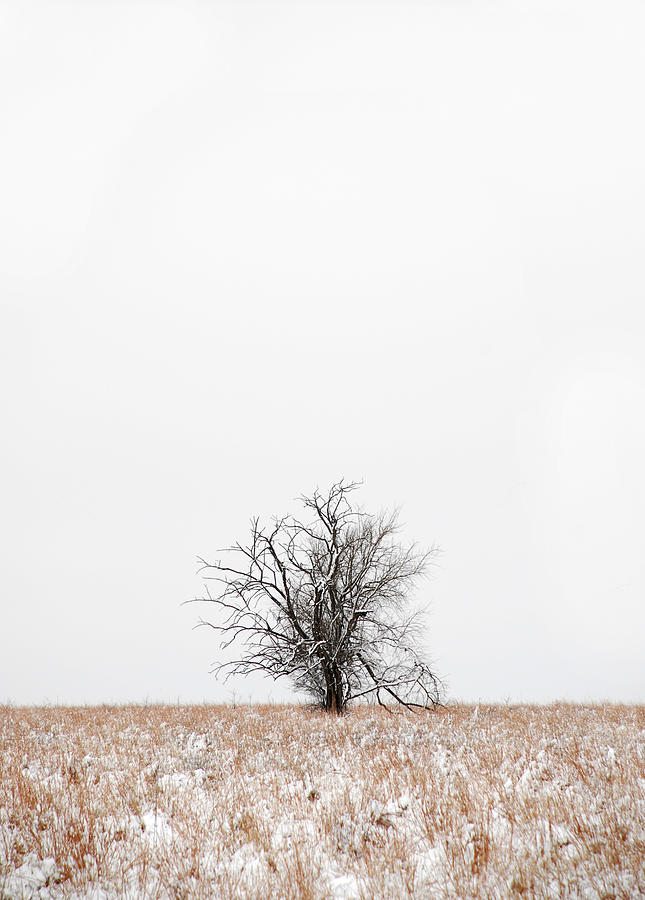 Snow Photograph - Lonely by Jessica Wakefield