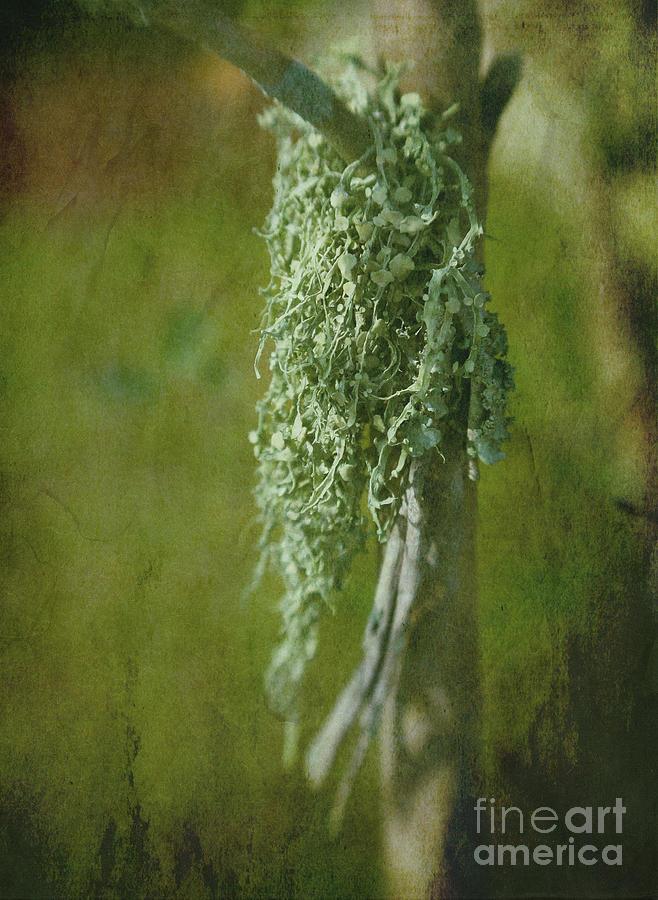 Lichen Photograph - Lonely Lichen by Judi Bagwell