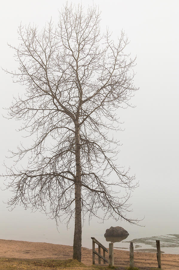 Fog Photograph - Lonely by Linda Ryma