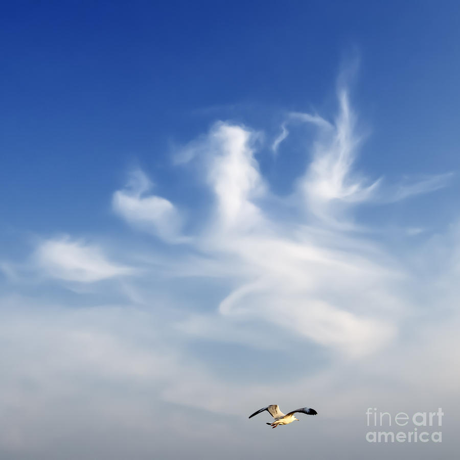 Animal Photograph - Lonely Seagull by Setsiri Silapasuwanchai