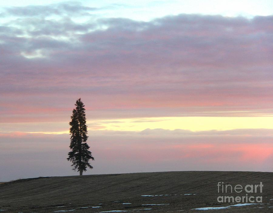 Tree Photograph - Lonely Sunset  by Yumi Johnson