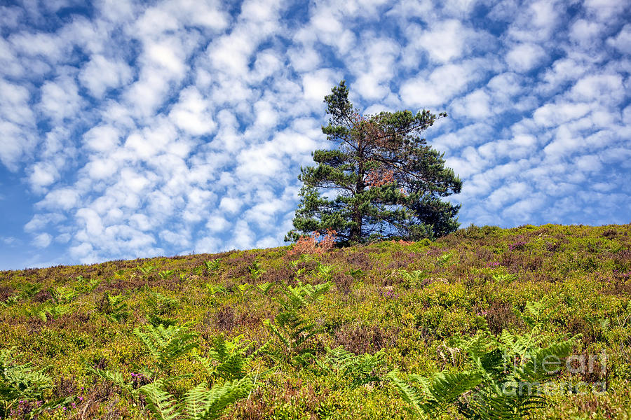 Clouds Photograph - Lonely Tree by Adrian Evans