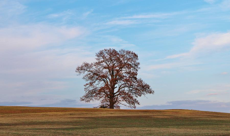 One Photograph - Lonely Tree by Cynthia Guinn