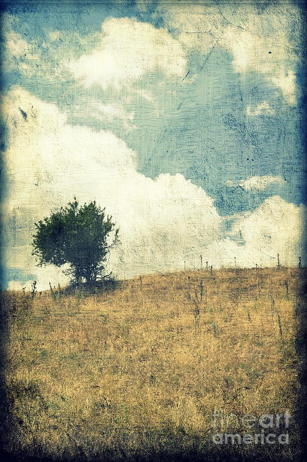 Textured Photograph - Lonely Tree by Ioanna Papanikolaou