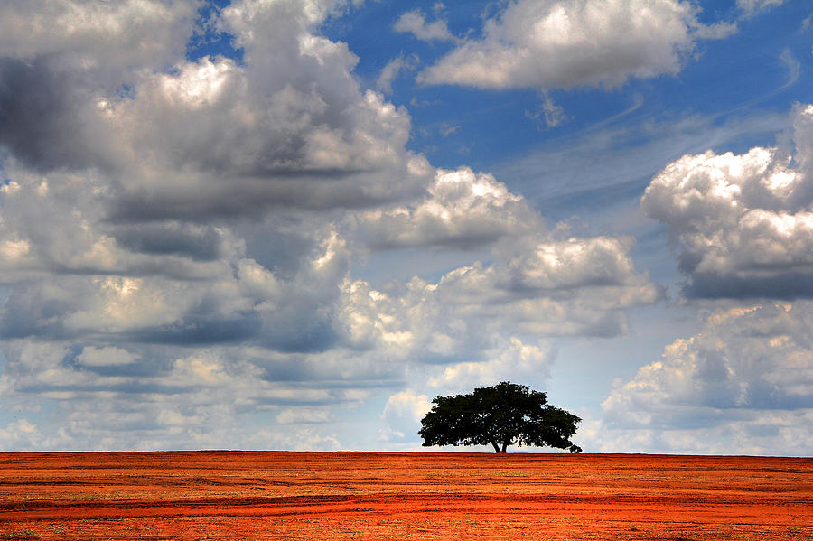 Lonely Tree On Plowed Soil Photograph by Jc Patricio