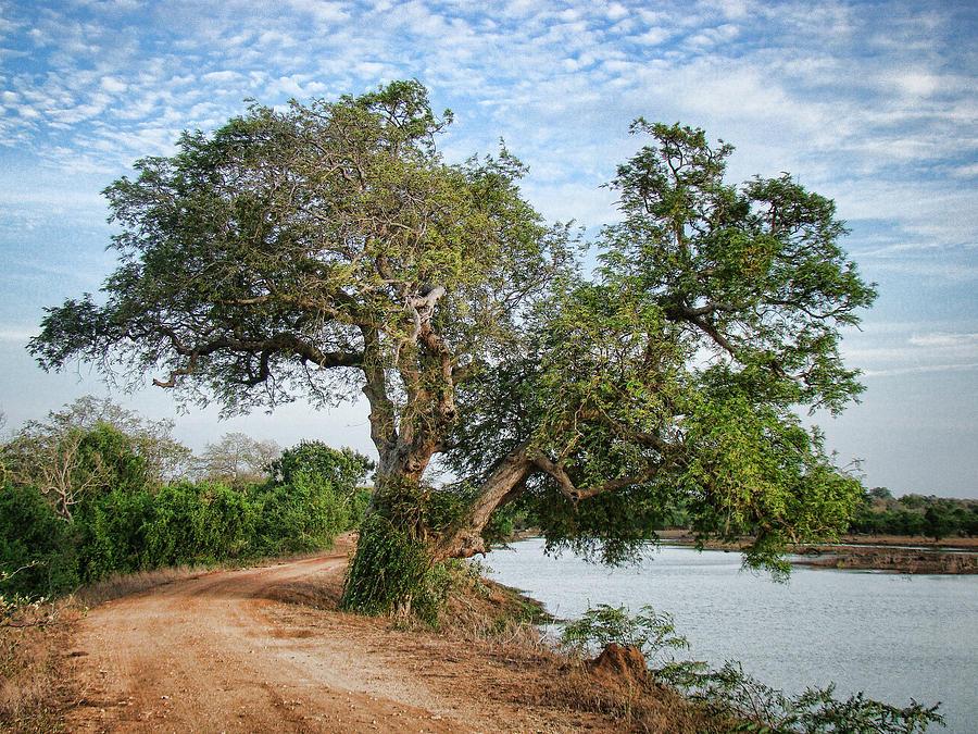 Tree Photograph - Lonely Tree by Sanjeewa Marasinghe