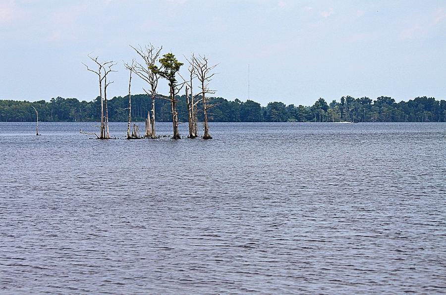 Tree Photograph - Lonely Trees by Carolyn Ricks