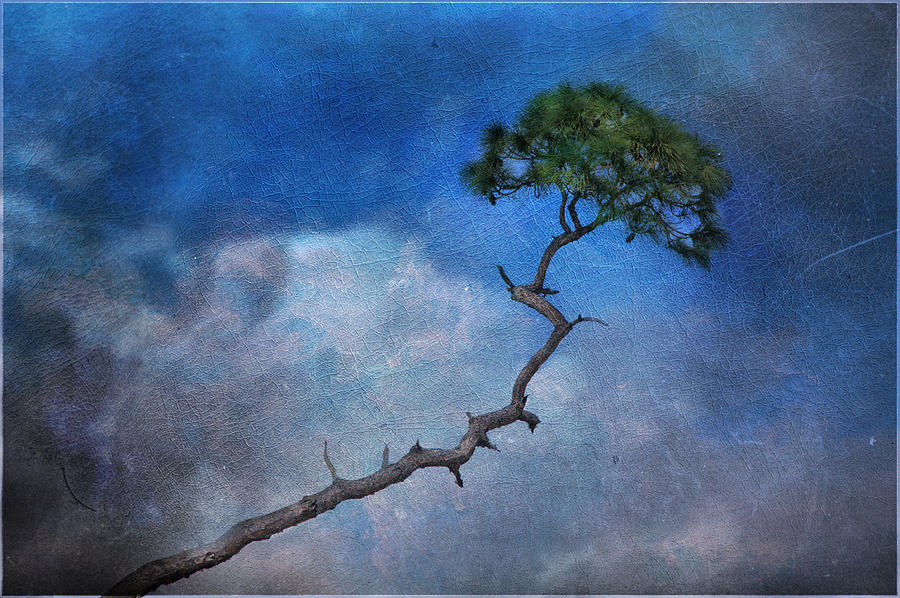 Landscape Photograph - Lonesome Pine by Eagle  Finegan