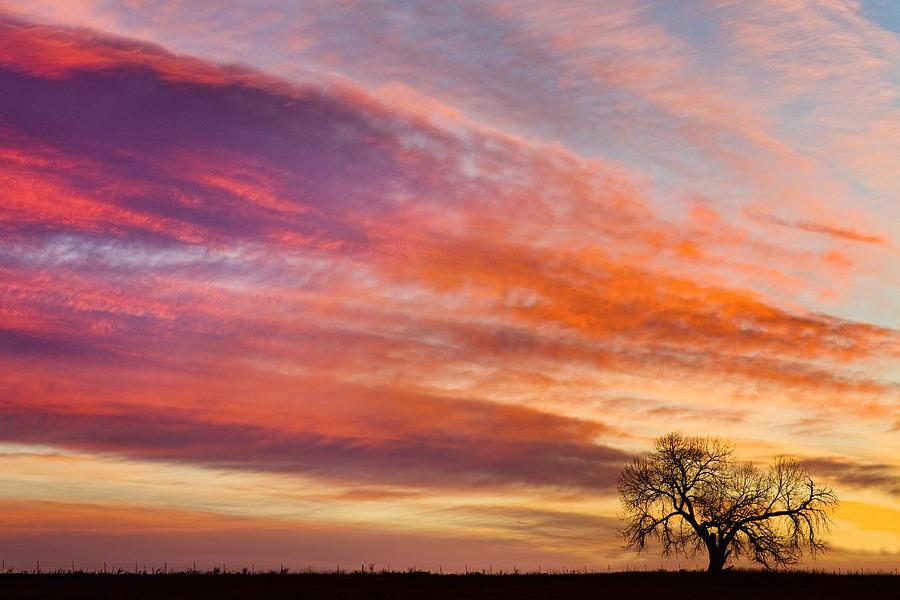 Sunrises Photograph - Lonesome Tree Sunrise by James BO Insogna